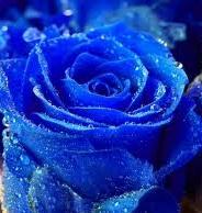 Flores de Invierno para iluminar tus días