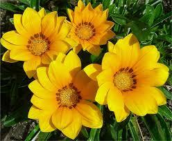 Cuidar tus flores, plantas y jardín en verano