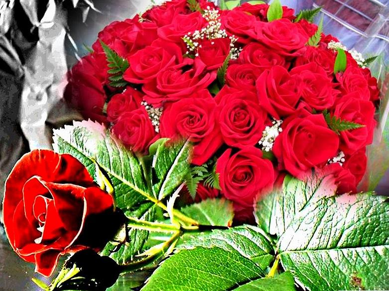San Valentín 2017, rosas rojas para enamorados