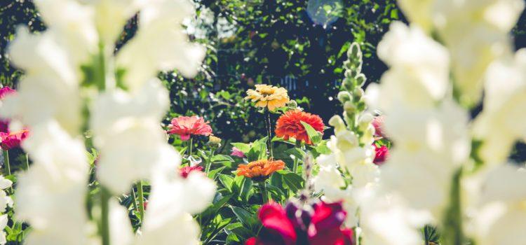 Flores  a domicilio en tu lugar de vacaciones