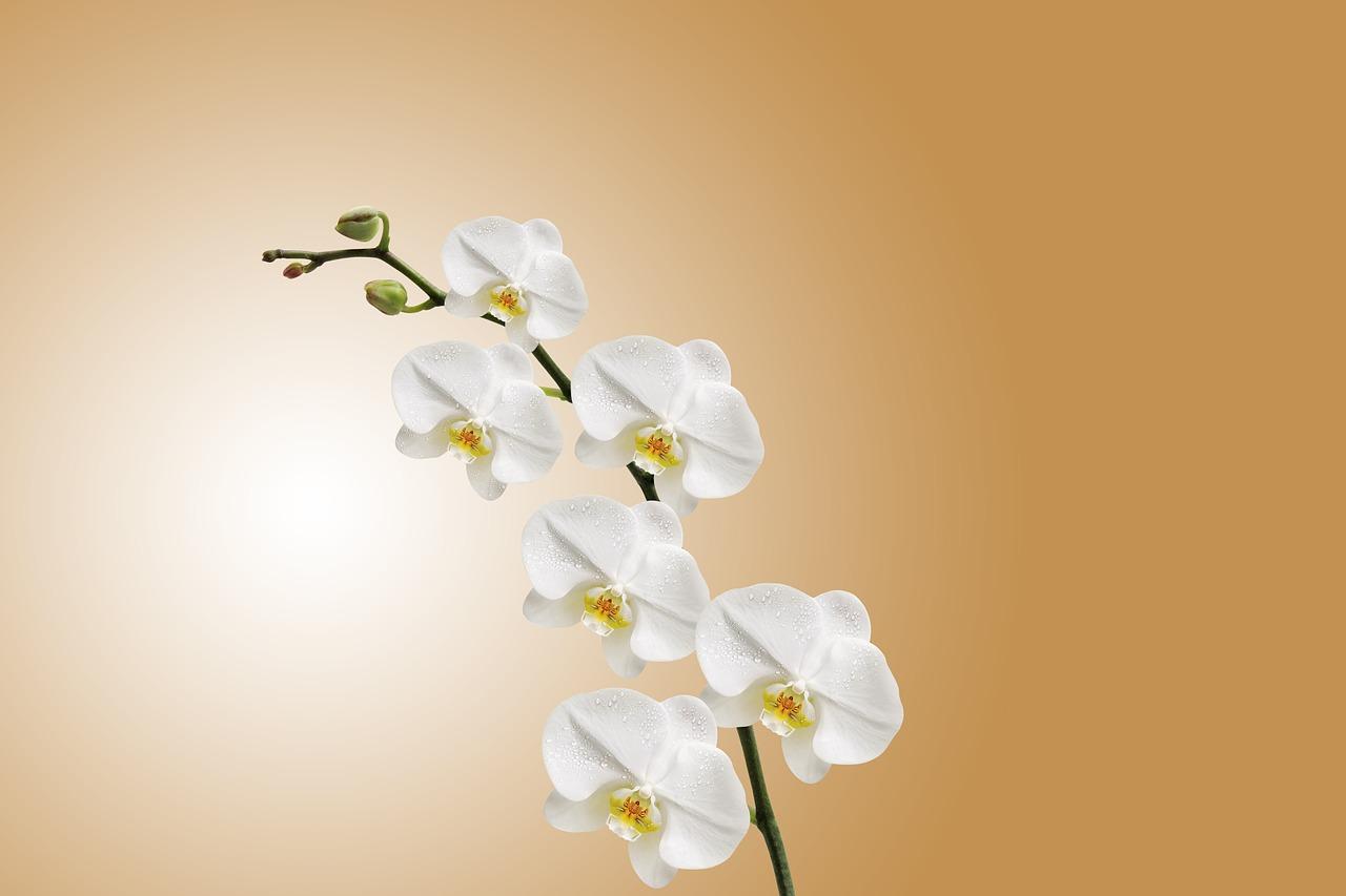 orquidea blanca recibiendo ventilacion