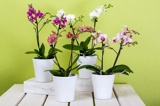 4 orquideas en macetas