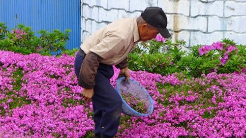 hombre japones plantando jardín