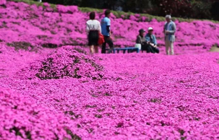jardín de Toshiyuki Kurogi y Yasuko Kuroki